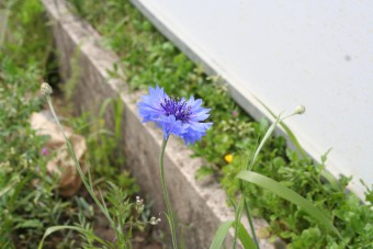 IMG_3498