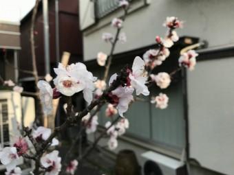 桜の画像|岡崎市・豊田市・幸田町を中心に注文住宅、新築一戸建てを手掛ける共感住宅ray-out(レイアウト)