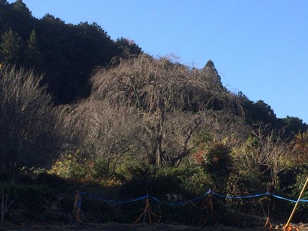 岡崎市で注文住宅、新築一戸建てを手掛ける共感住宅ray-out(レイアウト)が建てた岡崎市の注文住宅から見える桜
