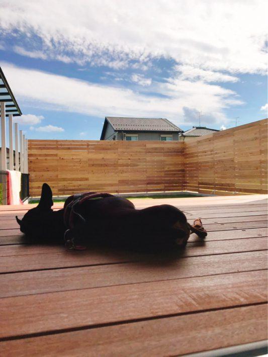 犬の昼寝|岡崎市・豊田市を中心に注文住宅、新築一戸建てを手掛ける共感住宅ray-out(レイアウト)