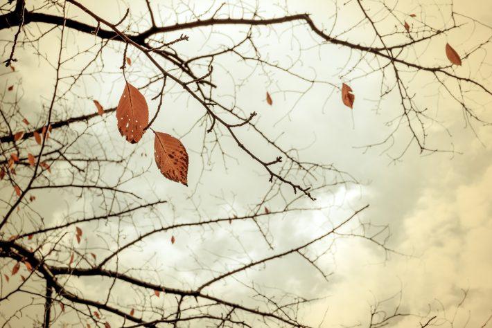 冬を迎える準備| 岡崎市・豊田市を中心に注文住宅、新築一戸建てを手掛ける共感住宅ray-out(レイアウト)