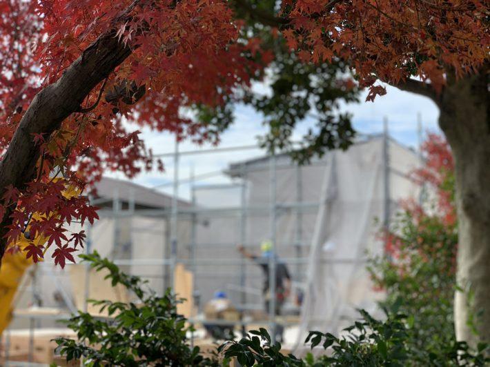 木々の間から|岡崎市・豊田市を中心に注文住宅、新築一戸建てを手掛ける共感住宅ray-out(レイアウト)