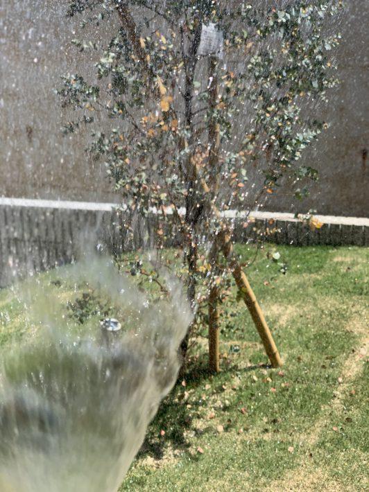 植栽の管理| 岡崎市・豊田市を中心に注文住宅、新築一戸建てを手掛ける共感住宅ray-out(レイアウト)